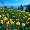 بهار، فصل انژی زا