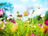 بهار، درس ها و اندرز ها